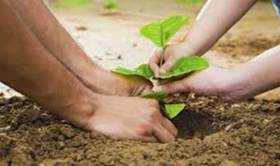 اگلے مالی سال 125 ارب روپے مالیت کے 10ارب درخت لگانے کا فیصلہ
