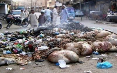 شہر قائد میں جانوروں کی باقیات و کچرے کے ڈھیروں سے تعفن اٹھنے لگا