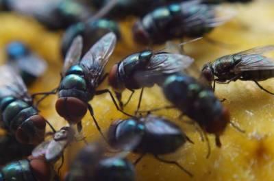 کراچی میں مکھیوں کی افزائش عذاب کی صورت اختیار کرگئی,شہری اذیت میں مبتلا