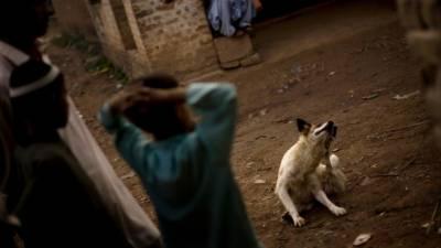 کراچی میں بائولے کتے کے کاٹنے سے 1شخص جاں بحق