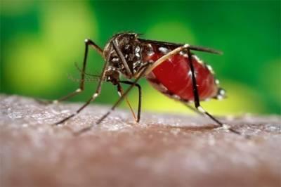 راولپنڈی: ڈینگی وباء تاحال بےقابو، 24 گھنٹوں میں مزید 150 شہری بخار میں مبتلا