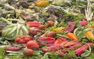خوراک کی عالمی پیداوار کا14فیصد حصہ صارفین سے پہلے ہی ضائع ہوجاتا ہے۔ ایف اے او