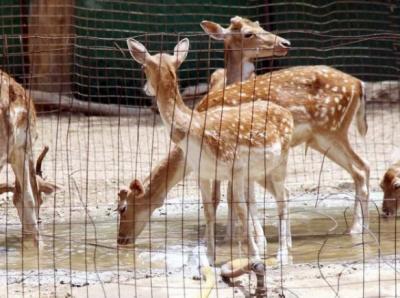 سندھ حکومت کا کراچی میں جانوروں کا ہاسٹل بنانے کا فیصلہ