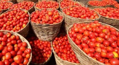 عوام کیلئے خوش خبری، ایران سے 15 ہزار 5 سوٹن ٹماٹر پاکستان درآمد کیے جائیں گے