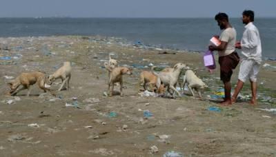 سندھ حکومت نے 'کتا مار مہم' کے بجائے کتوں کو ٹیکے لگانا شروع کردیے