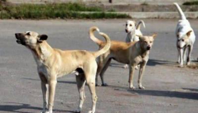 سندھ میں آوارہ کتے بے قابو،مزید دو بچوں کو کاٹ لیا۔