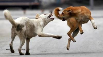 سندھ کے بعد آوارہ کتے پنجاب میں بھی بے قابو،بچہجاں بحق، 6 افرادزخمی