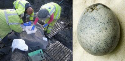 1700 سال قدیم انڈا دریافت