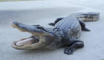 فلوریڈا:ونڈو شاپنگ کرتے مگر مچھ نے شہریوں کو خوفزدہ کردیا