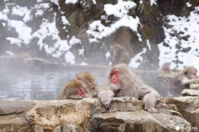 ایک بندرکو بچانے کی کوشش ، 13 بندر تالاب میں ڈوب کر ہلاک