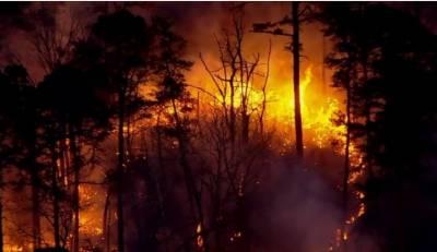 امریکا کے جنگلات میں خوفناک آتشزدگی