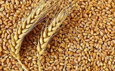روس کا شمالی کوریا کو انسانی ہمدردی کے تحت 25 ہزار ٹن گندم کا تحفہ