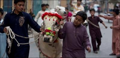 عیدالاضحیٰ پر جانوروں کی قربانی، علما سے مشاورت کی جائے گی