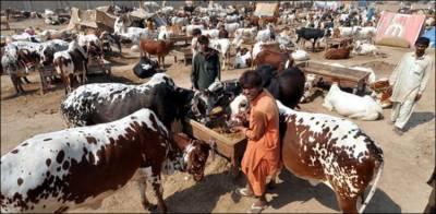 مویشی منڈی لگانے پر پابندی عائد