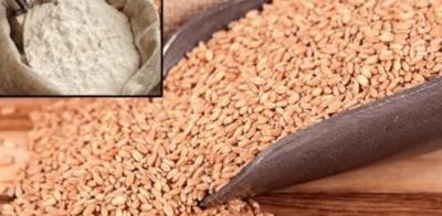 'ملکی ضروریات کو پورا کرنے کے لیے گندم درآمد کرنا پڑے گی'
