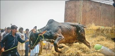 مویشی منڈی اور اجتماعی قربانی کے حوالے سے بڑا فیصلہ