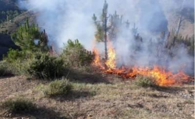 ایبٹ آباد، سربن پہاڑی کے جنگل میں آتشزدگی،50 سے زائد درخت جل گئے