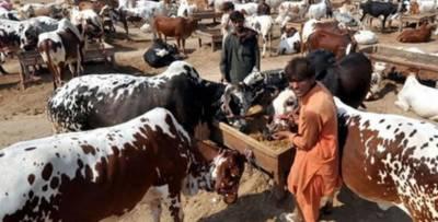 لاہور:14 مقامات پر مویشی منڈیاں لگانے کی منظوری دے دی گئی