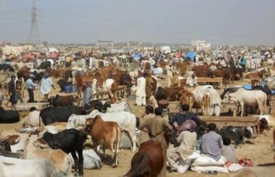 مویشی منڈیوں کے قیام سے متعلق حکومت نے اہم ہدایات جاری کردیں