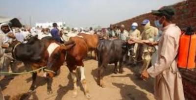 لاہور میں 12 مویشوی منڈیوں میں کورونا وائرس میڈیکل کیمپ فعال بنانے کا نوٹی فکیشن جاری