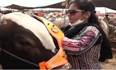 کراچی: مویشی منڈی میں خاتون بیوپاری بھی جانوروں کی فروخت میں مصروف