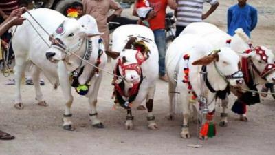 سندھ حکومت نے عیدالاضحیٰ کی تعطیلات میں اضافہ کردیا