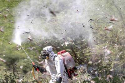 بلوچستان اور سندھ میں ٹڈی دل کے خاتمے کیلئے کوششیں تیز