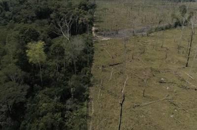 برازیل ،ایمازون جنگلات : 12سال میں درختوں کی کٹائی میں خطرناک اضافہ