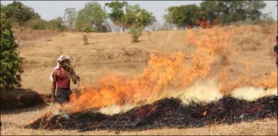فصلوں کی باقیات کو آگ لگانے پر 50 ہزار روپے جرمانہ عائد