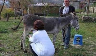 البانیہ: گدھی کا دودھ کورونا کا علاج قرار، مانگ میں اضافہ