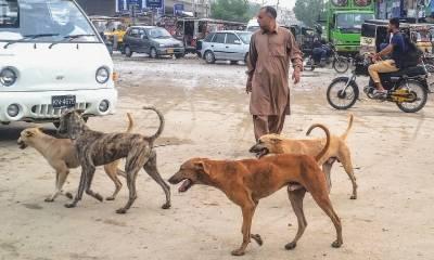 سندھ ہائی کورٹ نے آوارہ کتوں کے خلاف کارروائی اور ویکسین سےمتعلق پیش رفت کی رپورٹ مانگ لی