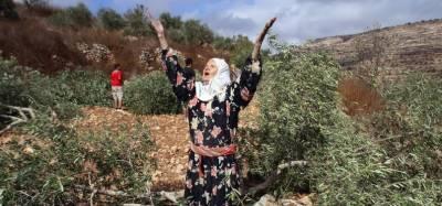 الخلیل:اسرائیلی آبادکاروں نے زیتون کے 100 درخت اکھاڑ پھینکے