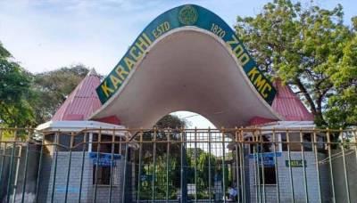 نیو کراچی منی زوپارک میں بندر پنجرے سے باہر نکل آیا