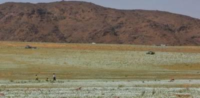 سعودی عرب میں دلکش مناظر، سفید گلاب سے زمین سج گئی، فضا معطر