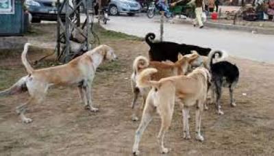 آوارہ کتوں نے سات بچوں کو کاٹ کر شدید زخمی