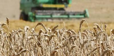 ملکی تاریخ میں رواں سال گندم کی ریکارڈ پیداوار