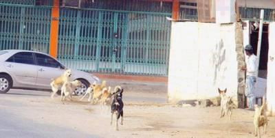 سعودی عرب: آوارہ کتوں کے حملوں میں بچوں کی اموات میں اضافہ