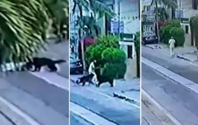 وکیل پر کتوں کا حملہ، مالک کی ضمانت میں جمعہ تک توسیع