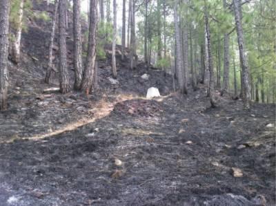 مری جنگل میں آگ بھڑک اٹھی ،درجنوں درخت جل کر خاکستر
