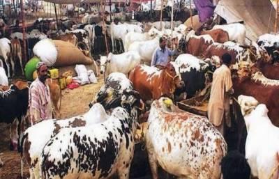 مویشی منڈیوں کے ٹھیکے سے حکومت پنجاب کو 4ارب زائد کی آمدنی