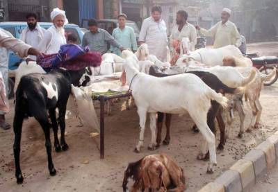 کاہنہ میں عید الاضحی پر مویشیوں کی قیمتوں میں اضافہ ، شہری پریشان