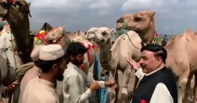 شیخ رشید قربانی کے جانور خریدنے منڈی پہنچ گئے